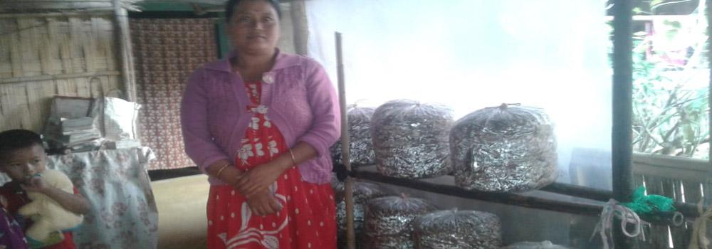 Mushroom cultivation by women SHG member of TRLM.